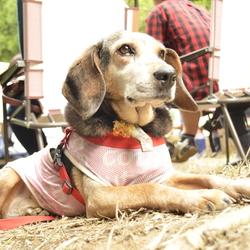 夕涼みの譲渡会 第二弾 保護犬の夏休み