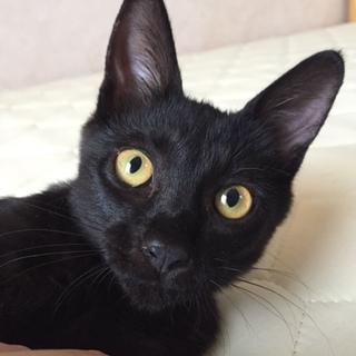 黒猫ちゃんの里親さんになってください♡