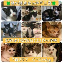 8/9(水)平日の夜!猫の譲渡会
