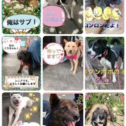 わんにゃん小梅保育園☆住協 川越支店で犬猫譲渡会 サムネイル2