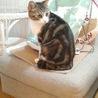 小さな猫カフェ ペルちゃん