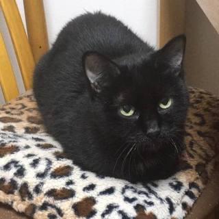 クールだけど猫が大好きな黒猫♀ 中野星子さん