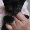 ジジみたいなかわいい黒猫の女の子