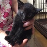 ジジみたいなかわいい黒猫の女の子 サムネイル2