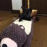 ジジみたいなかわいい黒猫の女の子 サムネイル4