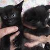 かわいい黒猫の女の子 サムネイル3