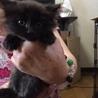 かわいい黒猫の女の子 サムネイル5