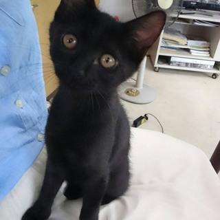 黒猫☆女の子(チエちゃん)
