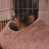 生後二ヶ月半の野良子猫の育成環境について
