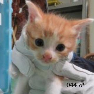 里親決定有難うございました!茶トラの子猫2匹です