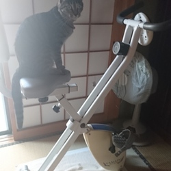 雅(みやび)さん、我が家が猫を飼う事になったのはネ