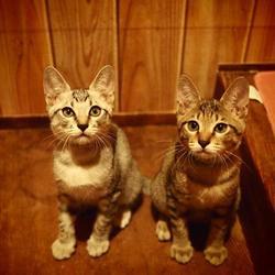 【子猫だらけのプチ譲渡会】 サムネイル2