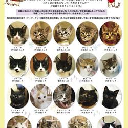【子猫だらけのプチ譲渡会】 サムネイル3