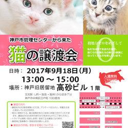 神戸市動物管理センターから来た、猫の譲渡会