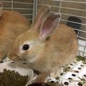 【決定】ジョージくん/ミニウサギ
