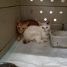 処分されます 二匹の子猫 サムネイル2