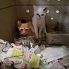 処分されます 二匹の子猫 サムネイル3