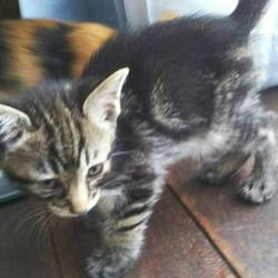 三重県桑名市8月20日(日)第70回リトルパウエイド猫の譲渡会