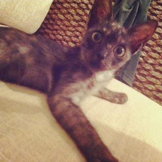 保護猫Stray cat2ヶ月メスFemale