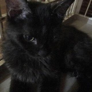 長毛黒猫くん④