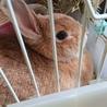 ウサギの里親様募集 サムネイル3