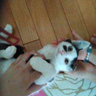 二ヶ月子猫