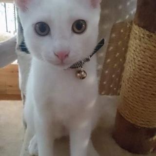 白猫 ミッチ君