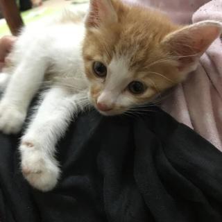 甘えん坊のおとなしい子猫です!