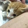 甘えん坊のおとなしい子猫です! サムネイル2