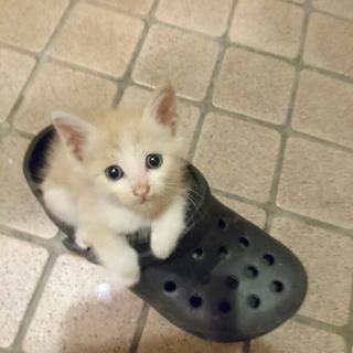 生後1ヶ月ぐらいの子猫です。