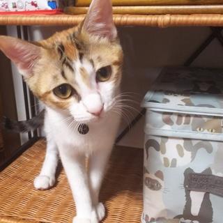 生後5ヶ月の三毛猫です!