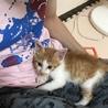 甘えん坊のおとなしい子猫です! サムネイル6
