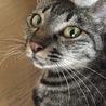 可愛いキジ猫の家族になって下さい サムネイル4