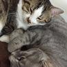 猫の里親募集中です サムネイル2