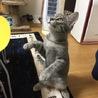 猫の里親募集中です サムネイル4