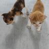 可愛い子猫姉妹 サムネイル2