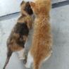 可愛い子猫姉妹 サムネイル3