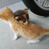 可愛い子猫姉妹 サムネイル6