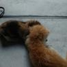 可愛い子猫姉妹 サムネイル7