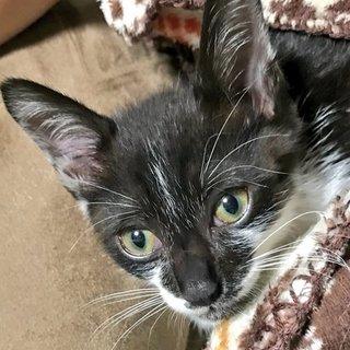 白黒子猫(生後3カ月♂)の里親募集中