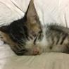 6月末生まれのオス子猫 サムネイル2