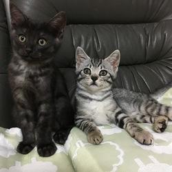 「5頭の仔猫保護」サムネイル2