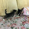 6月末生まれのオス子猫 サムネイル3