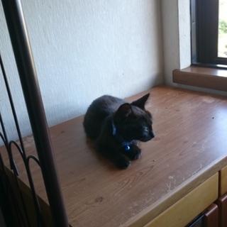 黒猫の子猫くーの里親さん募集