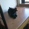 黒猫の子猫くーの里親さん募集 サムネイル2