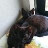 黒猫の子猫くーの里親さん募集 サムネイル4