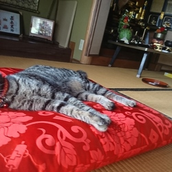 「雅(みやび)さん、それはアンタのベッドじゃない」サムネイル1