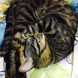 ジジちゃんのお昼寝サービス