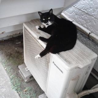お家が大好きになった猫さん