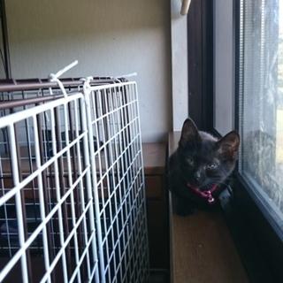 黒猫子猫のふーです。里親さん募集